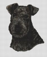 Black Lakeland Terrier