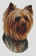 Yorkshire Terrier Smirk PDF