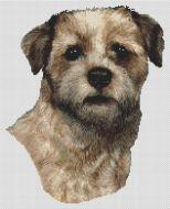 Wheaten Border Terrier