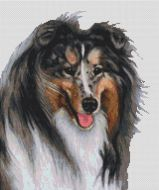 Collie - Blue Merle PDF