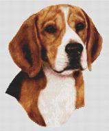 Beagle III PDF