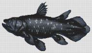 Coelacanth PDF