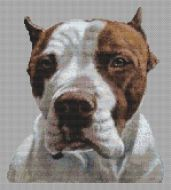 American Pit Bull Terrier PDF