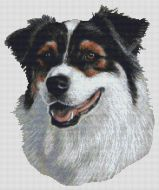 Australian Shepherd Tri-color II