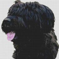 Black Briard