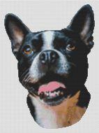 Boston Terrier Smile PDF