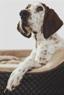 Treeing Walker Coonhound PDF