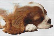 Sleepy Cavalier Pup PDF