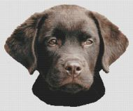Chocolate Lab Pup 2 PDF