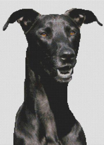 Black Greyhound